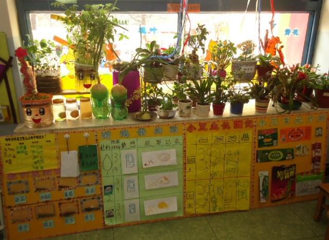 幼儿园花园式自然角布置图片