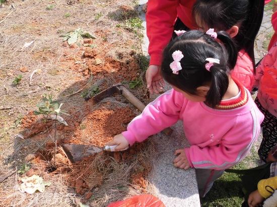 """福建沙县龙湖红缨幼儿园举办""""植树节""""活动"""