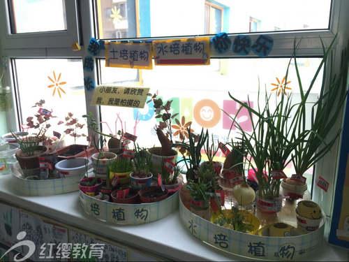 辽宁大连红缨阳光幼儿园开展班级种植角评创活动