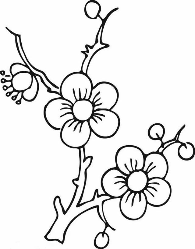 【简笔画】植物简笔画教程1
