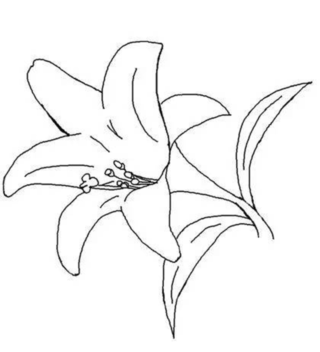 【简笔画】植物简笔画教程2