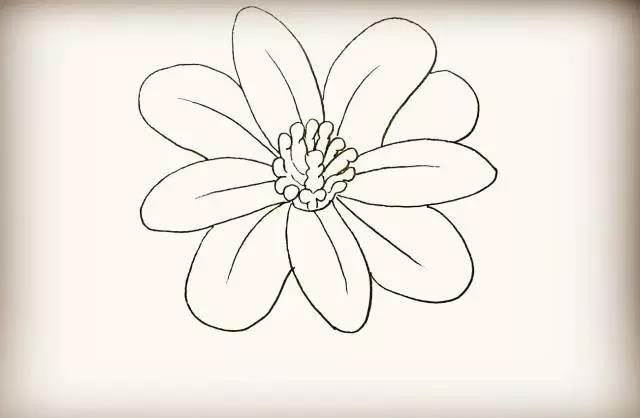 【简笔画】花朵