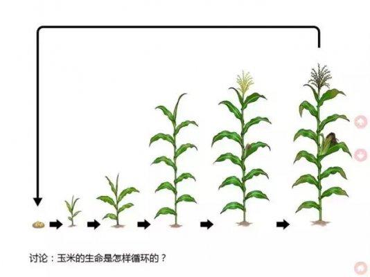 和孩子一起观察记录10种动植物的生长过程,并发现这些生命过程的相似.