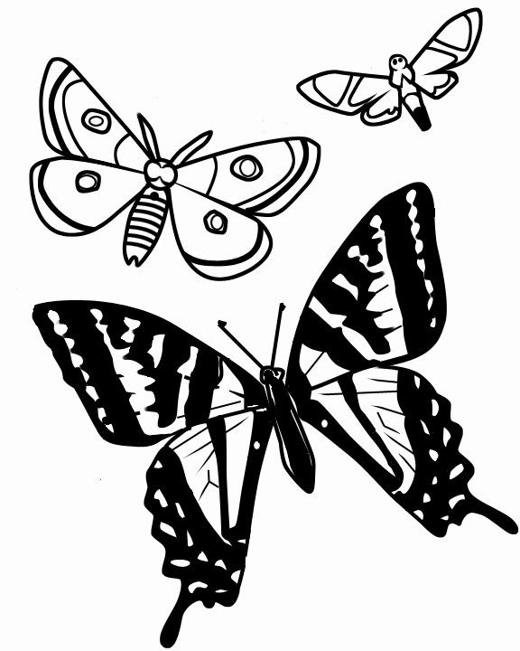 彩色卡通蝴蝶简笔画 梦幻卡通蝴蝶 彩色卡通蝴蝶